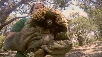 Episodio 3 (TTemporada 1) de 72 Cutest Animals