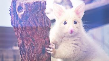 Episodio 6 (TTemporada 1) de 72 Cutest Animals