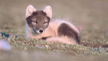 Episodio 8 (TTemporada 1) de 72 Cutest Animals