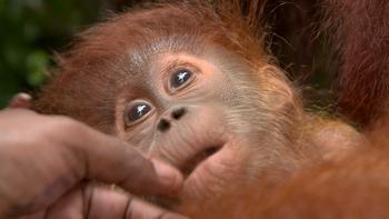 Episodio 4 (TTemporada 1) de 72 Cutest Animals