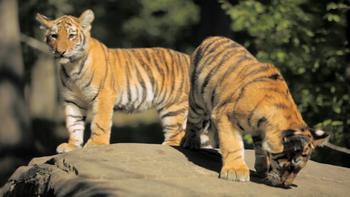 Episodio 12 (TTemporada 1) de 72 Cutest Animals