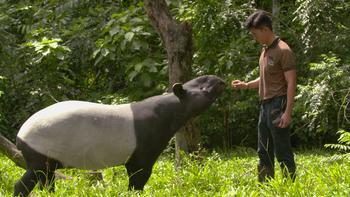 Episodio 7 (TTemporada 1) de 72 Cutest Animals